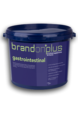 Brandon Plus Gastrointestinal